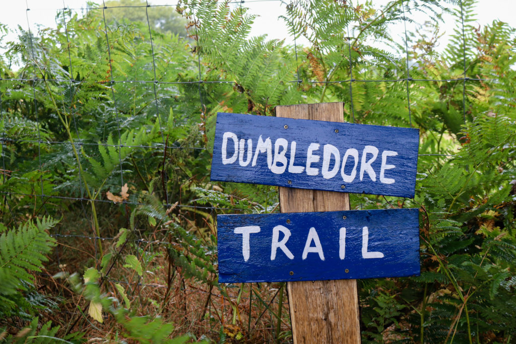 Dumbledore trail at Arne Nature Reserve