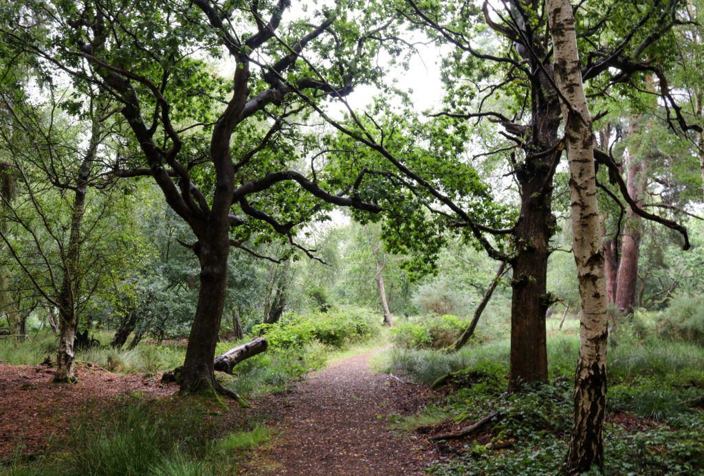 Woodland path at Arne nature reserve