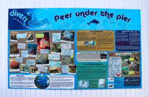Information board outside Divers Down in Swanage
