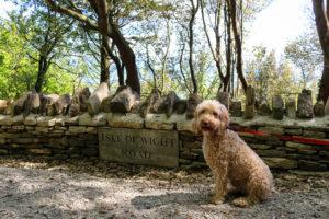 Dog on woodland walk, Durlston