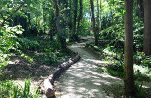 Winding path through woodland at Durlston Country Park