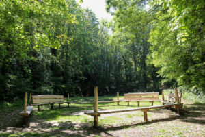 Woodland seating area in a glade at Durlston Country Park