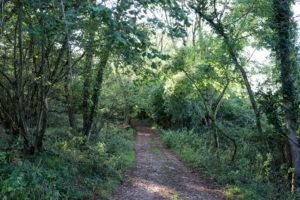 Entrance to Wilkeswood Woods near Harman's Cross