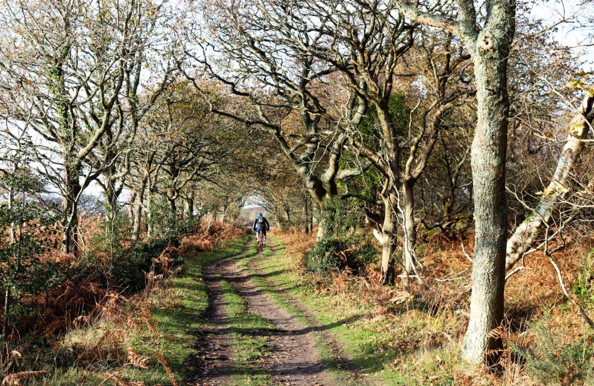 Cyclist on woodland trail at Hartland Moor, Dorset