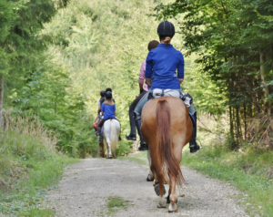 People horse riding through forest track