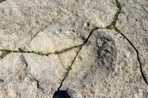 Dinosaur footprints at Keate's Quarry