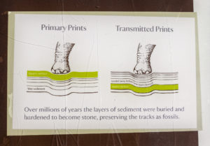 Keate's Quarry dinosaur tracks explanation board