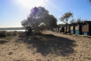 Knoll Beach beach huts and tree