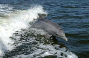 Dolphin coming out of the sea