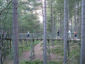People walking across treetop bridge in Moors Valley Country Park