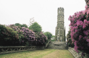 Rhododendrons along path leading up to Charborough folly tower