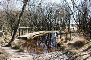 Bridge over standing water through heather walk to Studland Naturist Beach