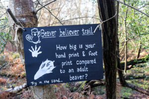 Beaver footprint information sign in the woods at Knoll beach Studland
