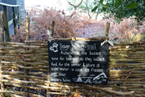 Autumn information about beavers in the woodland adjacent to Knoll Beach