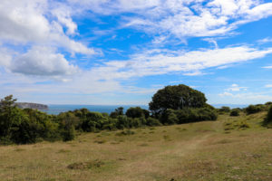 Glimpse of Ballard Down from Townsend Nature Reserve in Swanage
