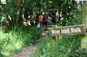 Woodland walk in Tyneham