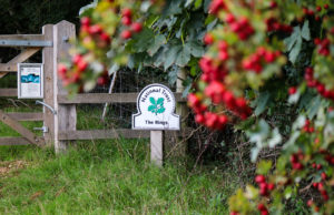 National Trust sign for Corfe Rings with berries