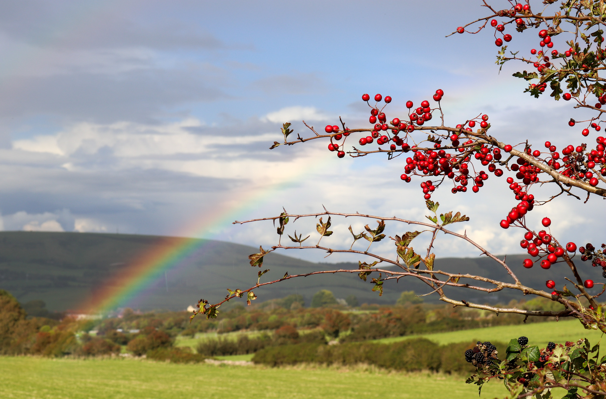 Rainbow and berries on the Purbeck Hills