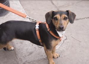 Small dog on pavement