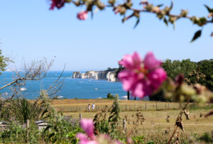 Old Harry Rocks view with couple and flowers