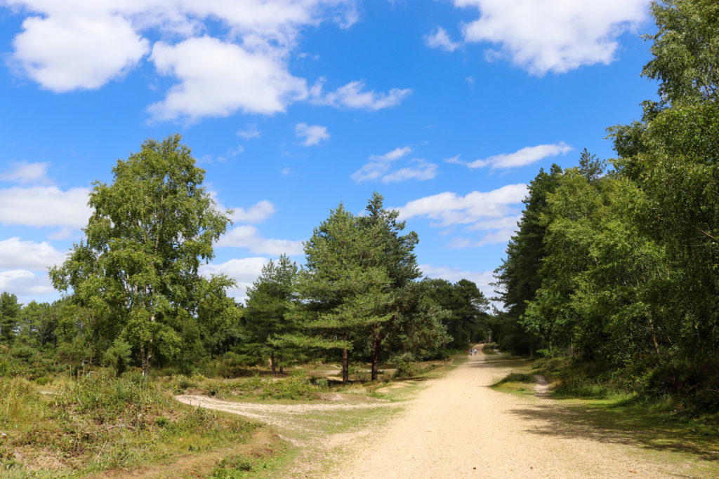 Bridle path in Wareham Forest with walking track