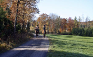 Two horse riders on woodland path