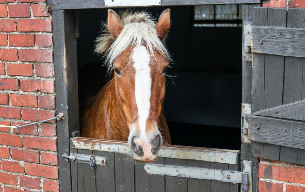 Horse looking out of stable door at Lulworth Equestrian Centre