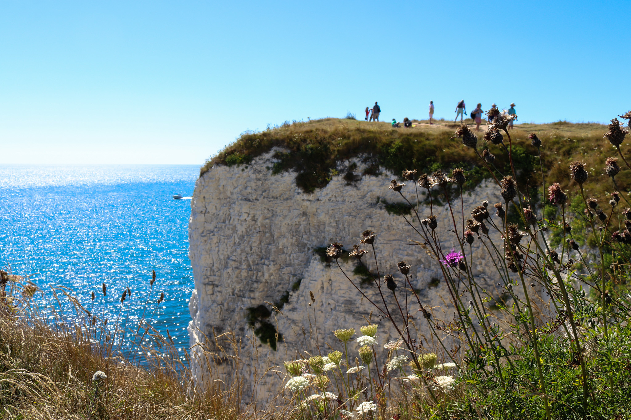 Wildflowers and people on Old Harry Rocks