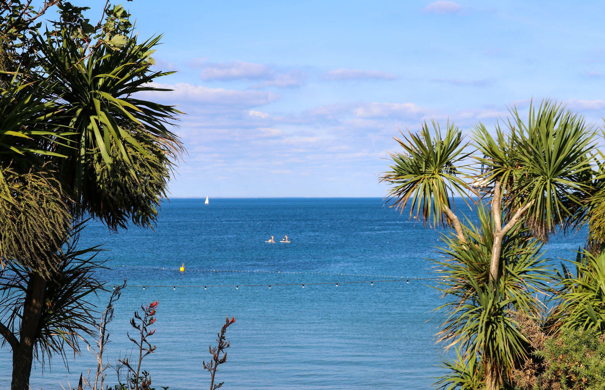 Palm trees and sea at Swanage
