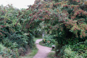 Path through rowan trees at Arne Nature Reserve