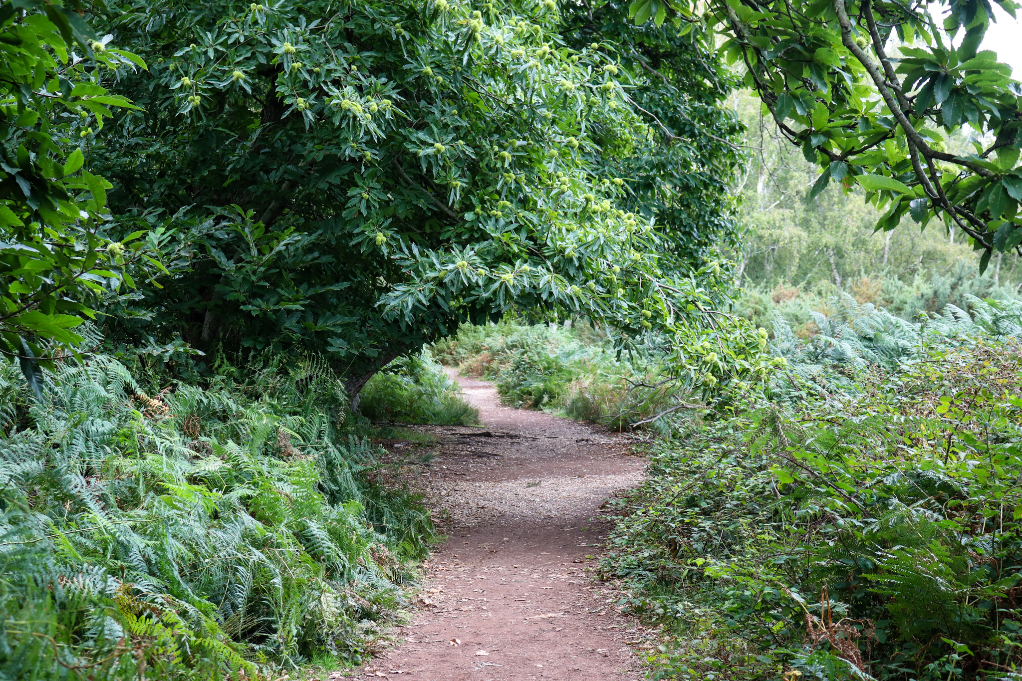pathway in the woods at Arne