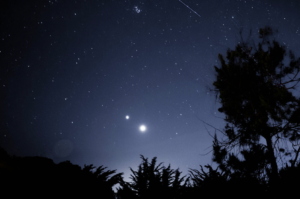 Stars and trees at night