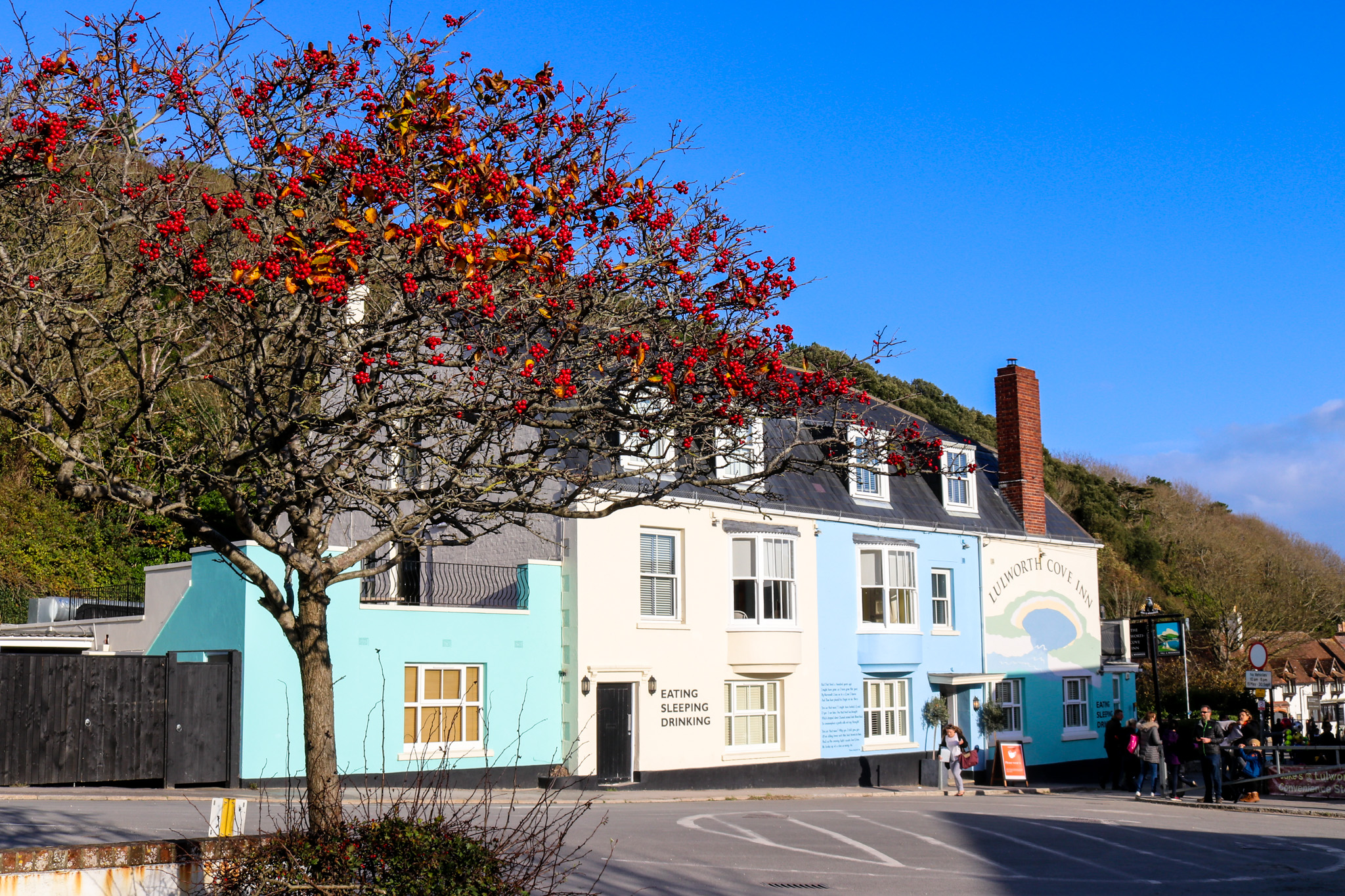 Rowan tree in front of colourful buildings and the Lulworth Cove Inn in West Lulworth