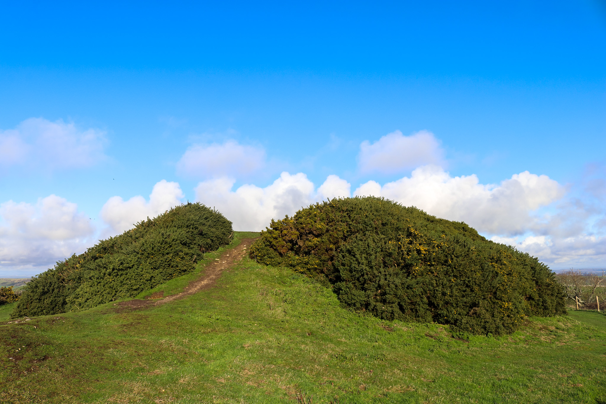 The mound at Swyre Head, Purbeck