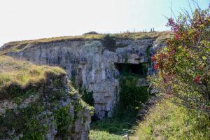 Vegetation around the Winspit quarry caves