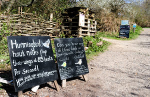 Informative blackboards about birds and their calls on the path at Arne