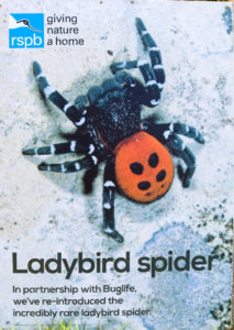 RSPB ladybird spider poster at the Arne Nature Reserve