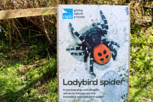 RSPB information poster about the ladybird spider in Arne