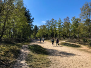 Group of people with nordic walking poles on main path in Wareham Forest