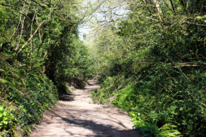 Pathway through trees on walk down to South Beach, Studland