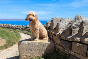 'To the Lighthouse' stone sign at Durlston, with dog sitting on top