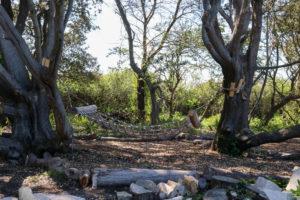 Swing Hammond in the trees at Durlston