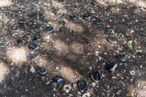 Woodland Clan activity trail rune stones, Durlston