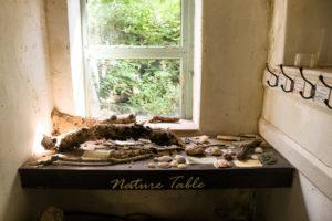 Sticks and shells on display on Tyneham's schoolroom Nature Table
