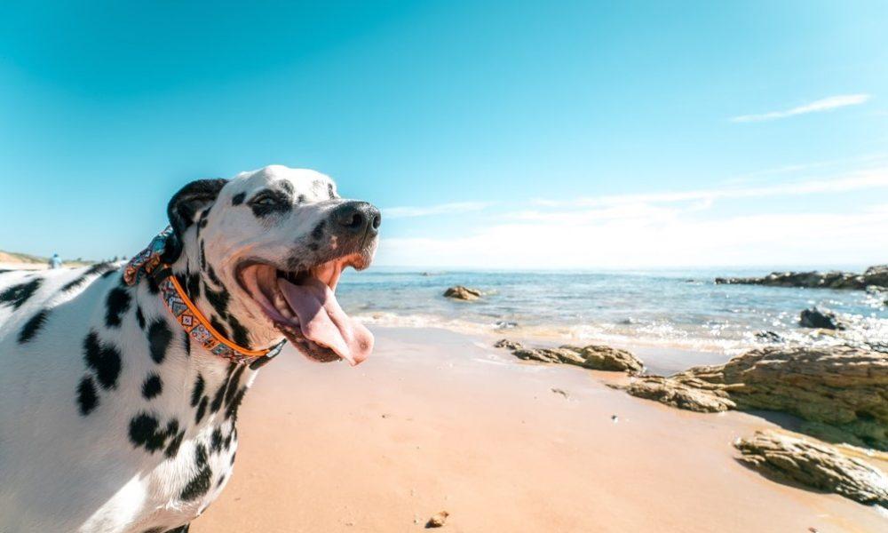Dog-Friendly Beaches