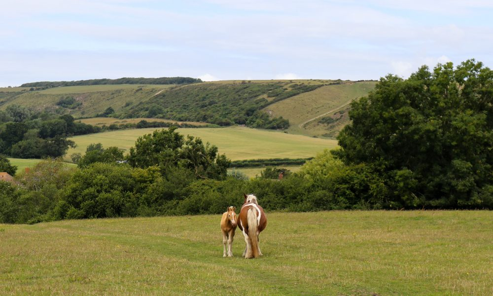 Horse and foal on Corfe Common