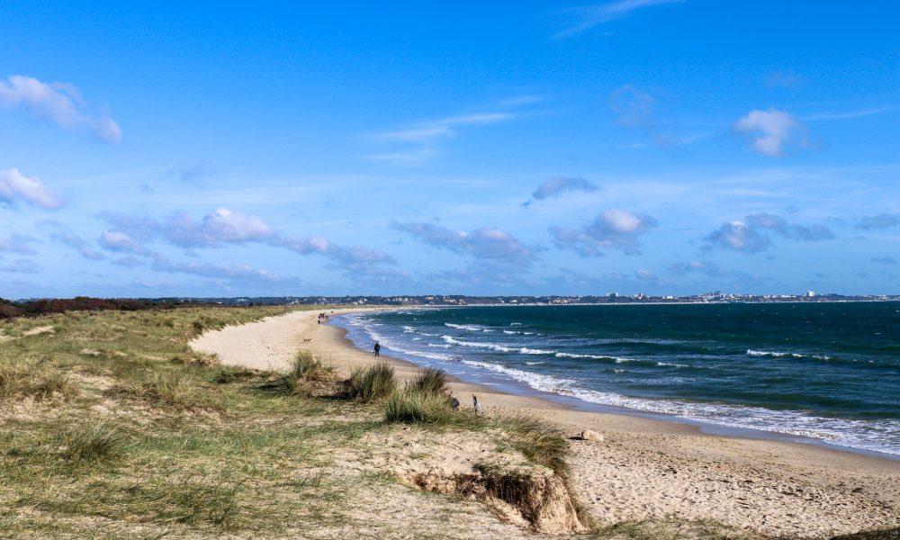 Grass, dunes and sand at Knoll Beach, Studland