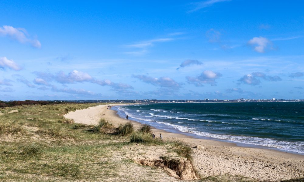 Grass, dunes and sand at Knoll Beach, Studland