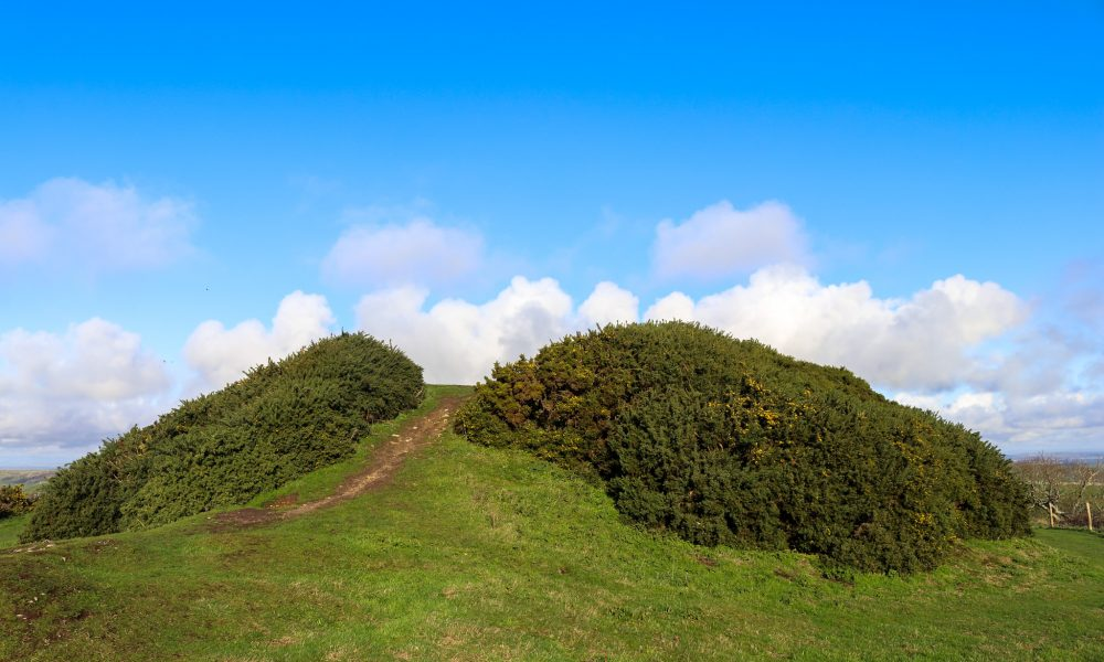 The gorse-covered tumulus at Swyre Head, Purbeck