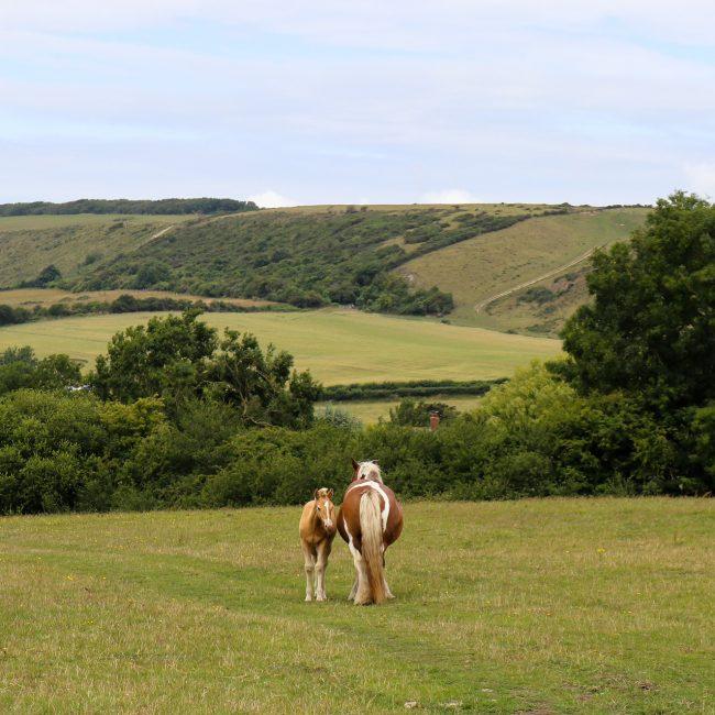 Purbeck Hills